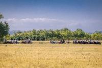 NicolaDaLio-Fotografo-Country-CAvalli-123